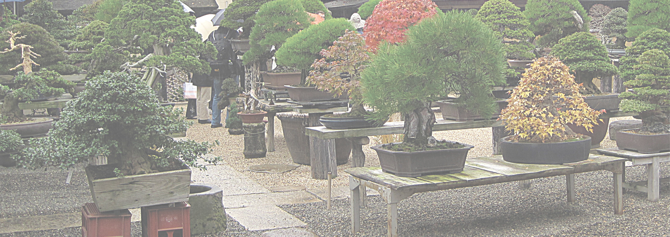 <span style='color: #003366; font-size: 20pt'>Appreciation for Bonsai and Viewing Stones has spread throughout the world—a world BCI Magazine brings to you with each issue.</span>