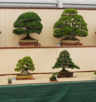 trees on display